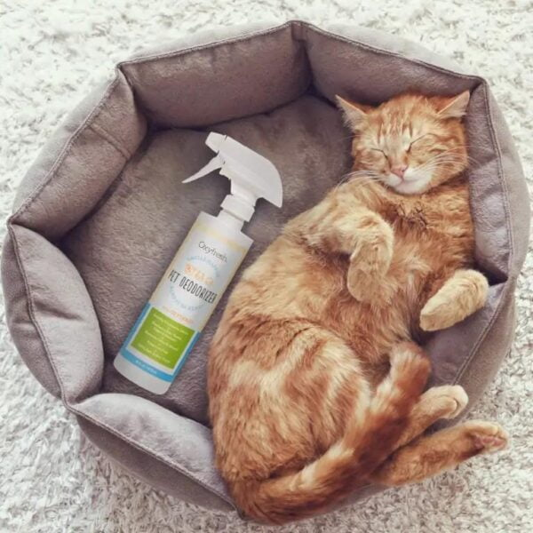 Cat sleeping next to odor eliminator bottle