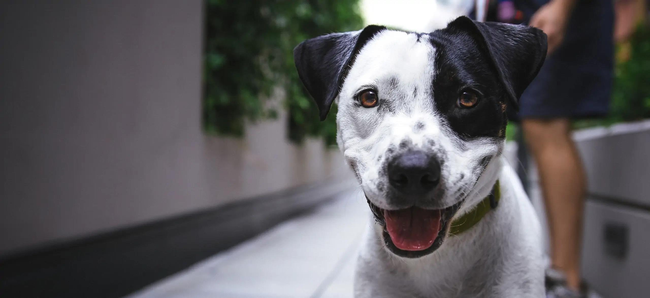Happy Dog-Shampoo
